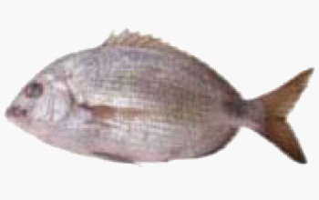 seafood-orata