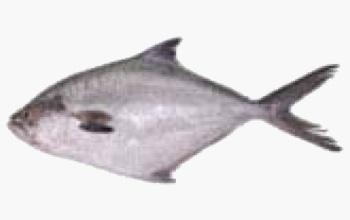 seafood-pompano