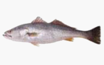 seafood-trota